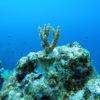 サンゴ礁の海を残したい!サンゴ移植