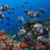 世界自然遺産 小笠原諸島
